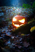Glooming halloween lantern in the forest — Stock Photo