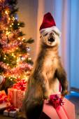 Badger with Santa's hat — Stock Photo