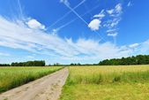 Lantlig väg i fältet — Stockfoto