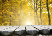 Empty table in  autumn forest — Stock Photo