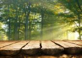 Empty table  in the forest — Stock Photo