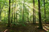Matin d'automne dans la forêt — Photo