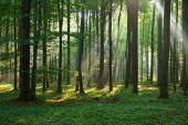 Autumn morning in the forest — Stock Photo