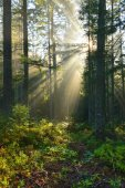 Autumn morning in the forest — Stock fotografie