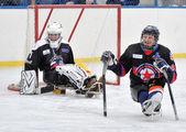 Sledge hockey goalkeeper and defender — Stok fotoğraf