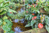 Botanical garden with small creek and flamingo flowers — 图库照片