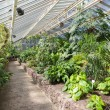 Greenhouse with tropical plants in Berliner botanical garden — Stock Photo #68786311