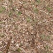 Background of forest floor with wood chips, sprigs, leafs, grass and pine cones — Stock Photo #72076819