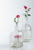 Still Life with roses on white background — Stock Photo