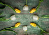 White and yellow tulips over shabby green wooden — Fotografia Stock