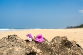 Pink Leelawadee flower on the sand — Stock Photo