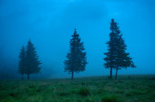 Foggy morning landscape with pine tree highland forest. — Stock Photo
