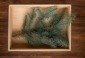 Christmas fir tree in box on wooden background. Top view — Stock Photo
