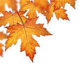 Orange fall leaves border — Stock Photo