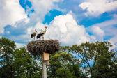 Cigüeñas en el nido — Foto de Stock