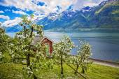 Norway fjords by spring — Stockfoto