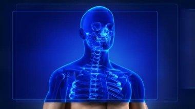 Human skeleton scanning — Stok video