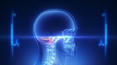 İnsan kafa x-ray tarama — Stok video