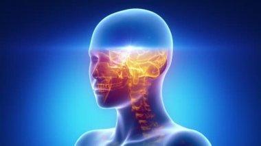 女性扫描头解剖 — 图库视频影像