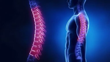 Focused on spine LUMBAR region — Stock Video