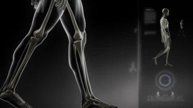 Interfaccia di scansione di ginocchio in ciclo — Video Stock