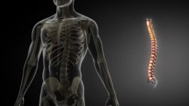 Spine anatomy medical scan — Stock Video