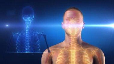 Skeleton medical view — Stock Video