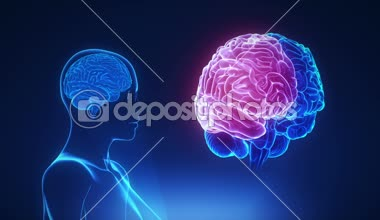 Female Thalamus in brain — Stock video