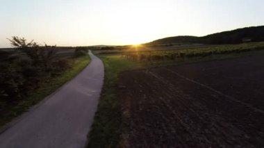Sunset over vineyard — Stock Video