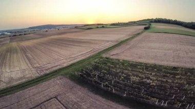 Flight over fields in sunset — Stock Video