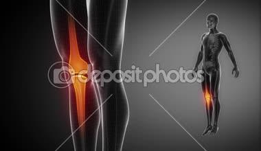 KNEE bone skeleton — Stock Video