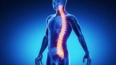 SPINE bone skeleton — Stock Video