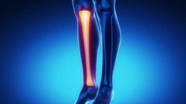 TIBIA bone skeleton — Stock Video