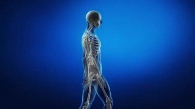 Male body in motion — Stock Video