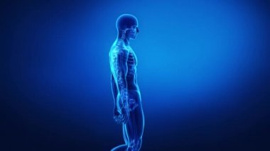 Bone skeleton x-ray scan — Stock Video