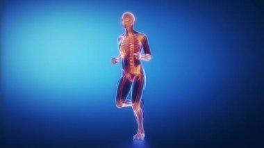 Running man skeleton scan — Stock Video