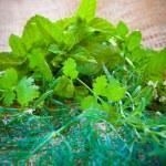 Mixed herbs - dill, cilantro, mint, basil, tarragon and rosemary — Stock Photo #52928963