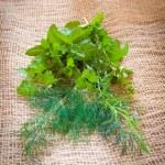 Mixed herbs - dill, cilantro, mint, basil, tarragon and rosemary — Stock Photo #52929017