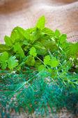 Mixed herbs - dill, cilantro, mint, basil, tarragon and rosemary — Stock Photo