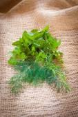 Mixed herbs - dill, cilantro, mint, basil, tarragon and rosemary — Zdjęcie stockowe