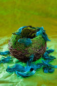 Empty nest with turquoise feathers — Stock Photo