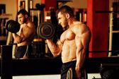 Bodybuilder training gym — Stok fotoğraf