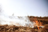 Wildfire. Fire. Global warming, environmental catastrophe. Conce — Stock Photo