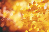 Fall, autumn, leaves backgroung. A tree branch with autumn leave — Stock Photo