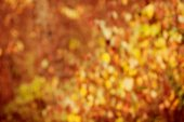 Autumn, fall background. Gold abstract bokeh defocused lights bl — Stock Photo