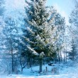 Winter background, landscape. Winter trees in wonderland. Winter scene. Christmas, New Year background Spruce, pine. — Stock Photo #58567365