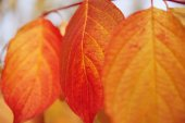 Fall, autumn, leaves background. A tree branch with autumn leave — Stock Photo