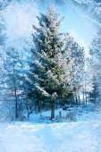 Winter background, landscape. Winter trees in wonderland. Winter scene. Christmas, New Year background Spruce, pine. — Stock Photo