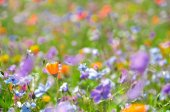 Meadow with colorful flowers growing in the grass. — Stock Photo
