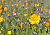 Meadow with colorful flowers growing in the grass — Stock Photo